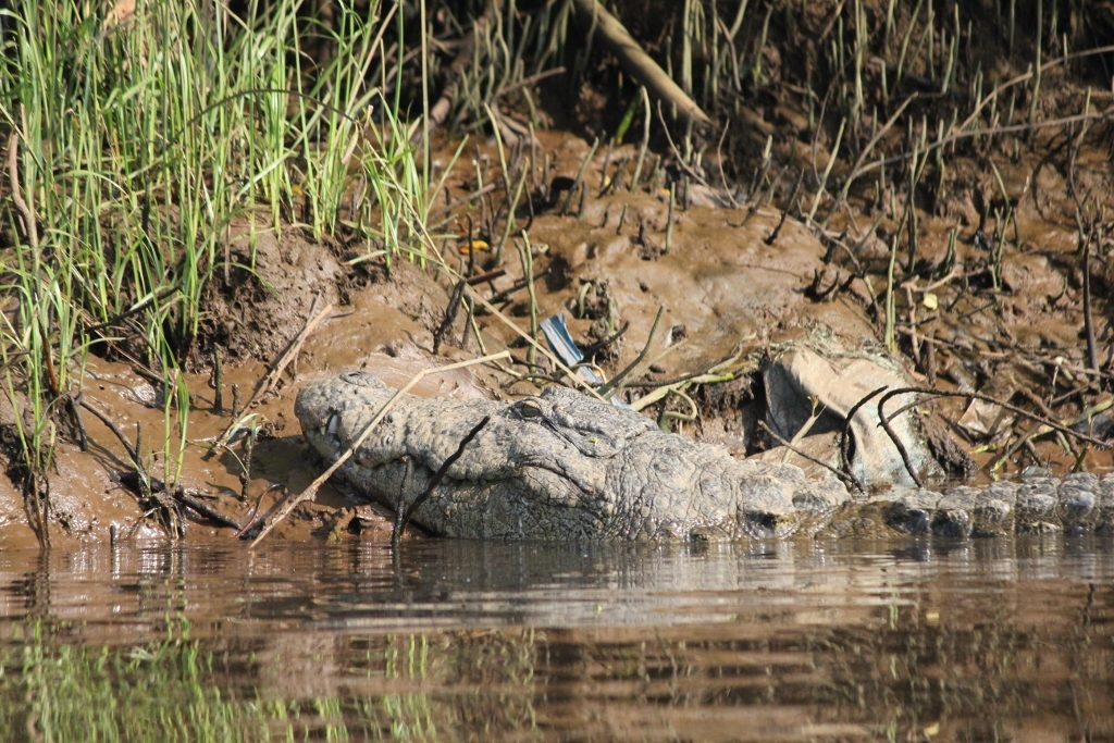 solotravellers at maldoli crocodile safari 2017 (1)