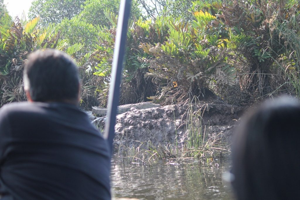 solotravellers at maldoli crocodile safari 2017 (17)