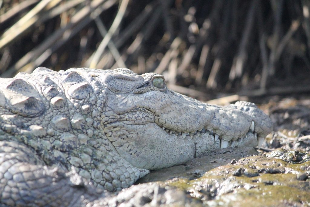 solotravellers at maldoli crocodile safari 2017 (23)