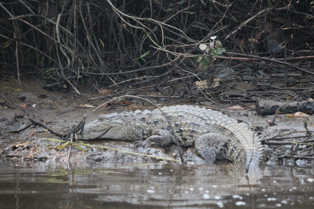 solotravellers at maldoli crocodile safari 2017 (29)